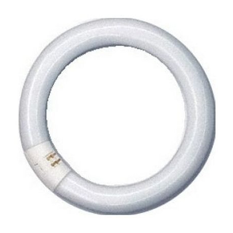 IQN743-NEON CIRCULAIRE 22W 216MM NECTA 098338
